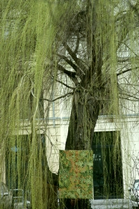 bazazza_under-the-willow-tree_0095